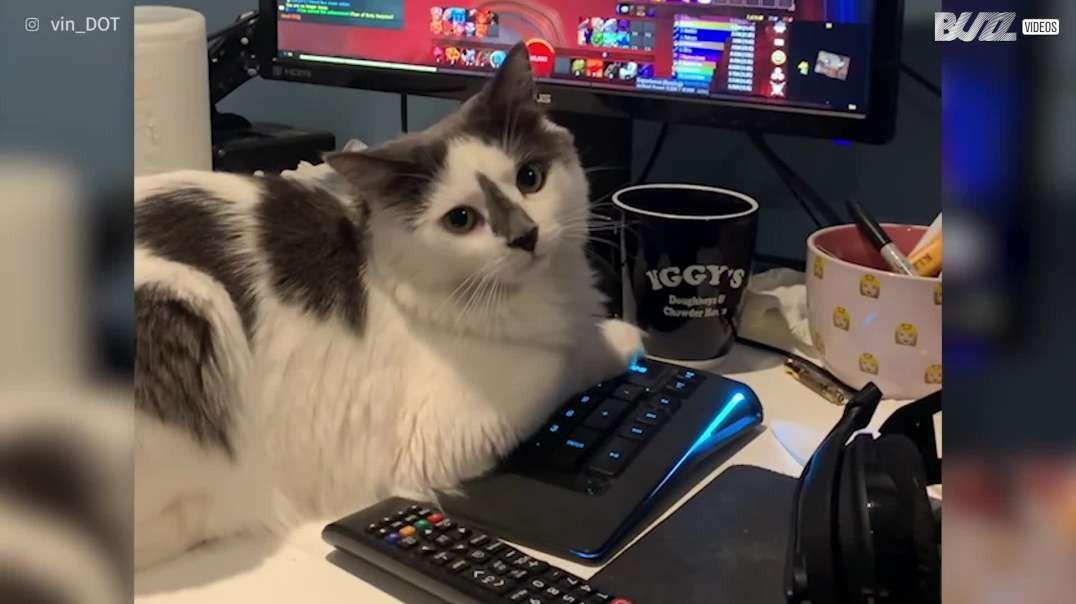 گربه بازی رایانه ای را قطع می کند