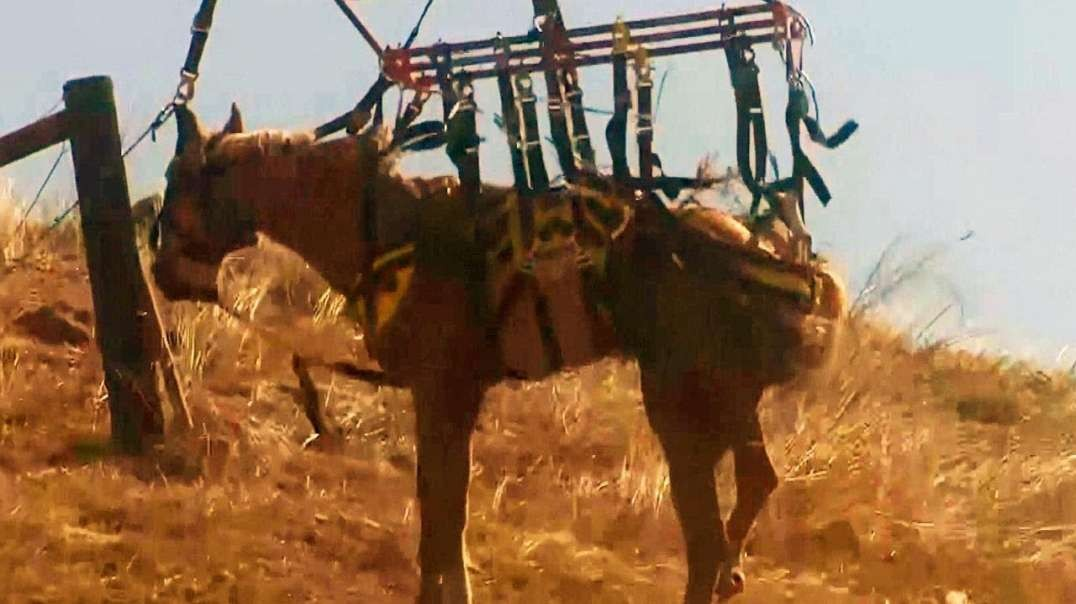 نجات اسب پس از آسیب از طریق عملیات هوایی