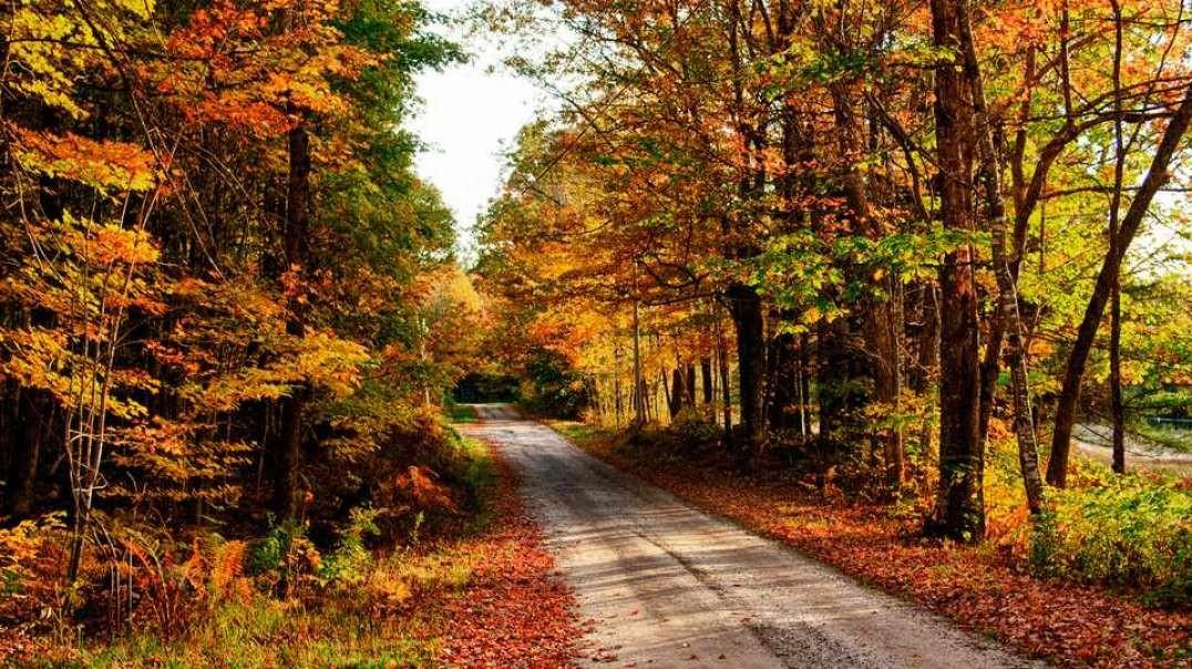 بهترین مقصد برای ریختن برگ در این پاییز