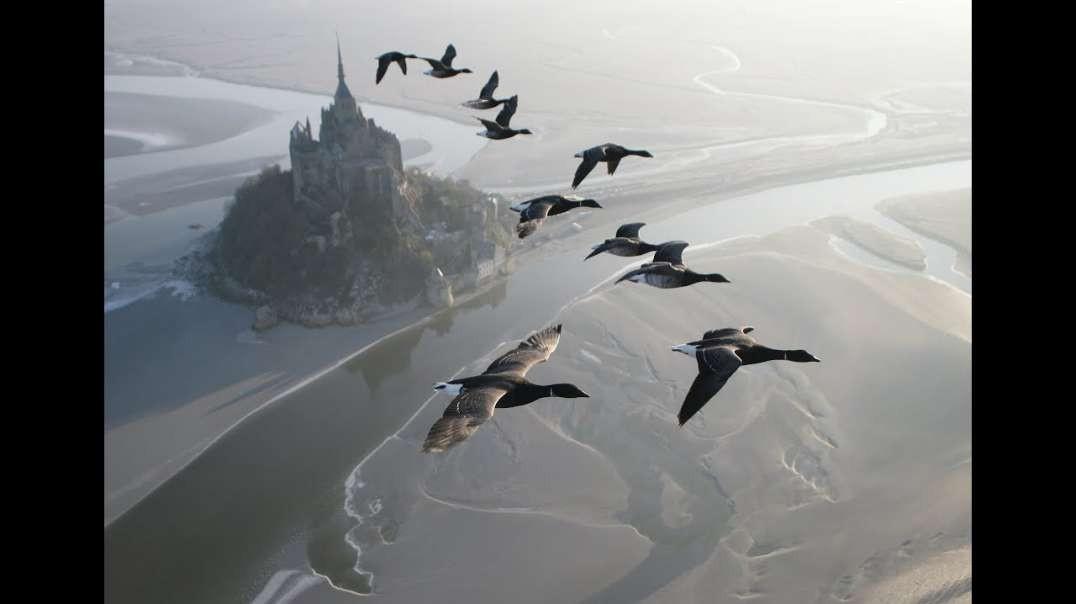 پروازهای شگفت انگیز با پرندگان بر روی یک میکرولایت. کریستین مولوک