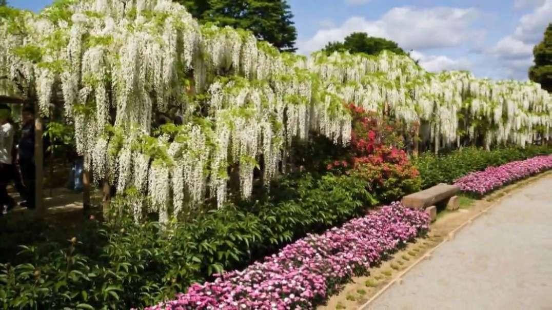 پارک گل ژاپنی