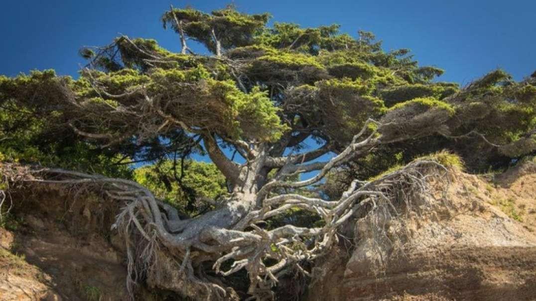 10 درخت شگفت انگیزترین جهان!