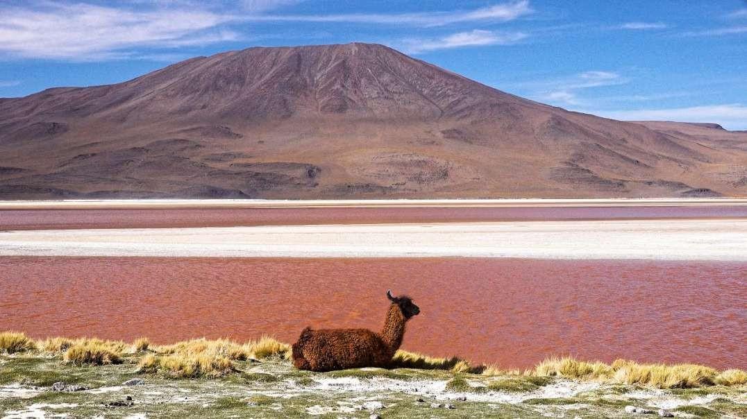 بولیوی آلتیپلانو و سالار دو یونی
